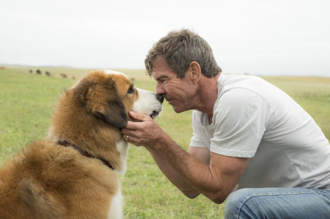 Dennis Quaid dans une scène de A Dog's... (Associated Press)
