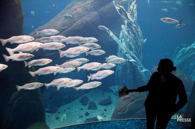 Des visiteurs admirent un aquarium au Biodôme de... (Photo Alain Roberge, Archives La Presse)
