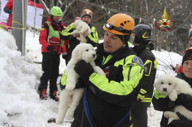 Des pompiers ont retrouvé trois chiots lors de... (PHOTO AP/FOURNIE PAR LES POMPIERS ITALIENS)