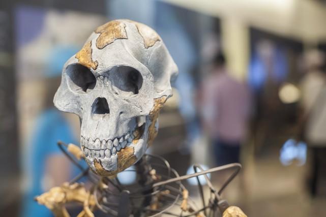 Les australopithèques comme la célèbre Lucy, dont l'espèce... (123rf/Juan Aunión)