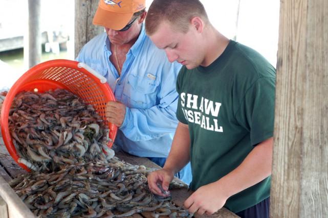 Le prix plus élevé à certaines périodes de l'année des crevettes de grande... (ARCHIVES AFP)
