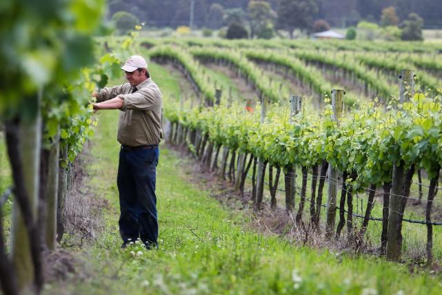 Une exploitation viticole biologique crée 1,5 fois plus d'emplois qu'une... (PHOTO ARCHIVES BLOOMBERG)