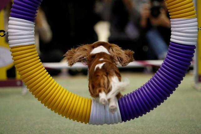 Un chien démontre ses habiletés lors d'une épreuve... (ARCHIVES REUTERS)