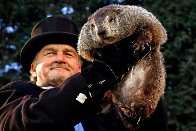 Phil, la célèbre marmotte de Punxsutawney en Pennsylvanie,... (Gene J. Puskar, AP)