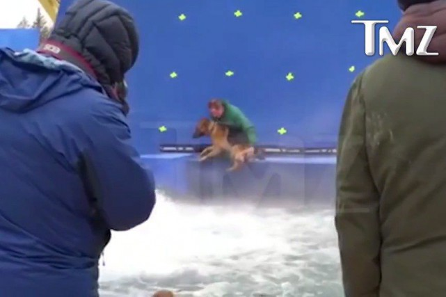 La vidéo d'une durée d'une minute intituléeA Dog's... (CAPTURE D'ÉCRAN LA PRESSE CANADIENNE/TMZ)