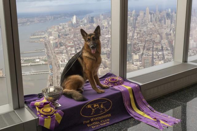 Agée de 5 ans, Rumo est une élégante... (PHOTO AP)