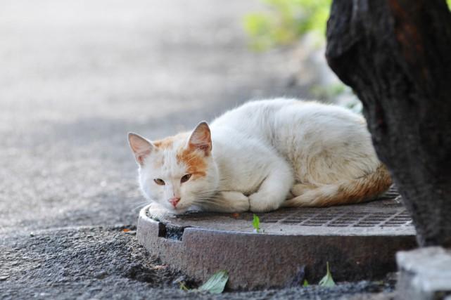 L'humain est ainsi fait, il se crée des besoins. En abandonnant, il engendre le... (123RF.com)