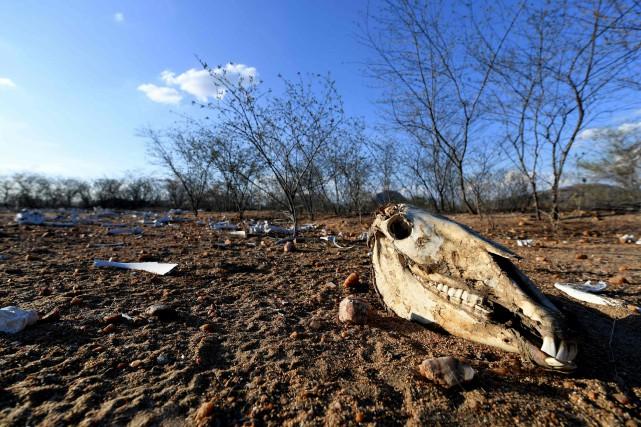 Depuis 2012, il n'a pratiquement pas plu dans... (PHOTO EVARISTO SA, AGENCE FRANCE-PRESSE)