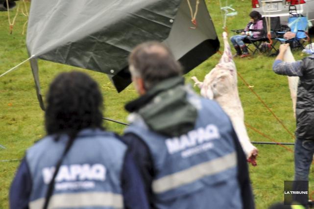 Le MAPAQ avait assisté à l'abattage de moutons... (Archives La Tribune, Éric Beaupré)