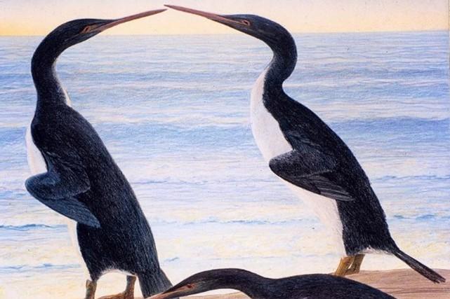 L'illustration d'un artiste desmanchots géants.... (Chris GASKIN, Geology Museum University of Otago, AFP)