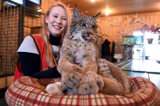 Ce jeune lynx de neuf mois fait l'objet... (Le Progrès-Dimanche, Rocket Lavoie)