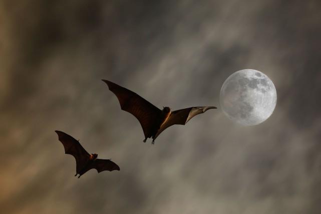 Les vampires ont la cote au cinéma.... (123RF)