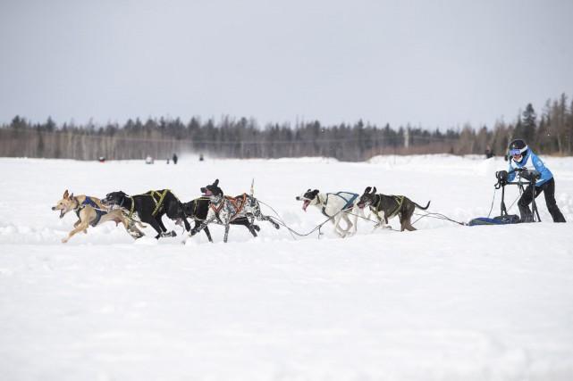 Les chiens couraient à vive allure sur la... (Olivier Croteau)