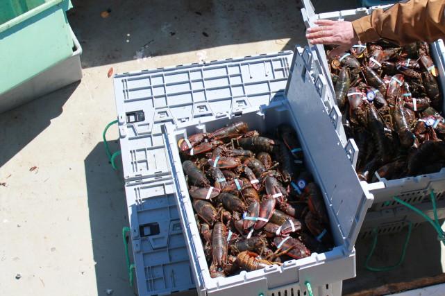 Plusieurs vols de cages de homards ont été... (Photo d'archives)
