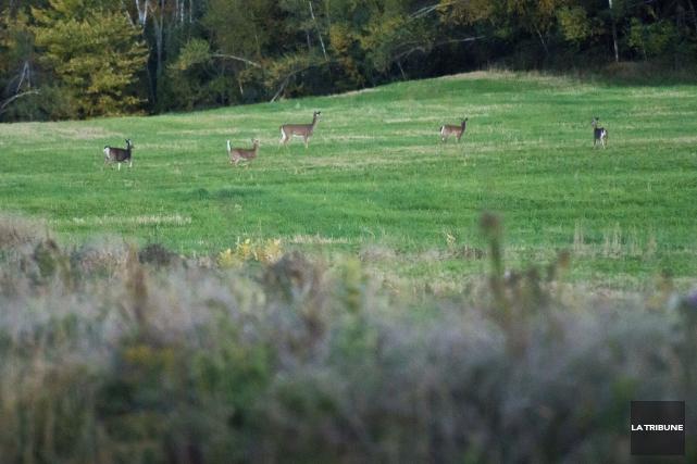 C'est tout à fait indécent. Ça fait plus de 50 ans que je pratique la chasse.... (Archives, La Tribune)