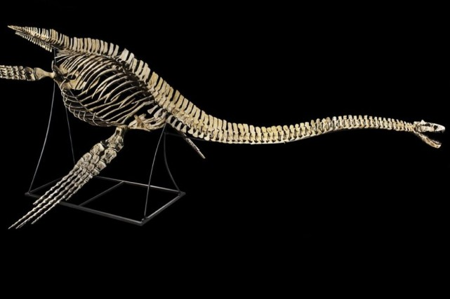Unplésiosaure marin (Zarafasaura oceanis) provenant du bassin des... (Drouot)