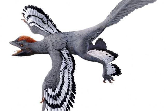 L'Anchiornis mesurait 12 cm de haut et possédait... (AFP, Julius T.Csotonyi)
