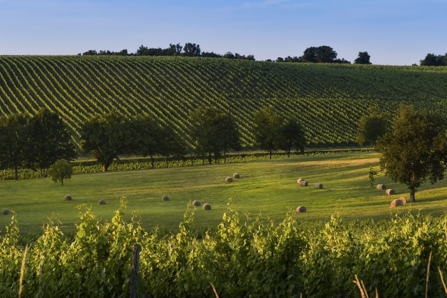 CHRONIQUE / Avec ses grands crus classés, ses vins primeurs et ses seconds vins... (FreeProd)
