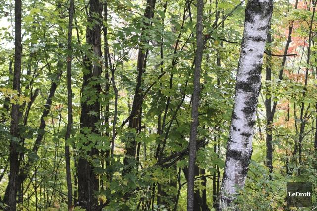Une entreprise forestière qui promettait de créer jusqu'à 200 emplois dans le... (Patrick Woodbury, archives Le Droit)