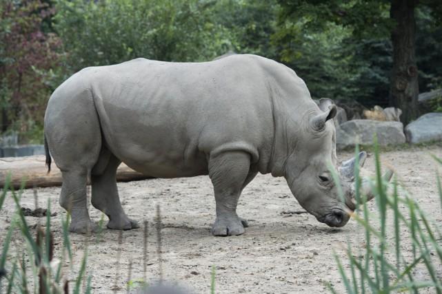 Des mesures sont en place au Zoo de... (fournie par le Zoo de Granby)