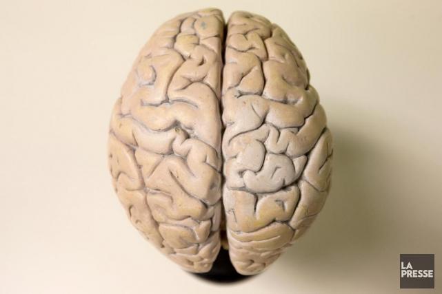 Des changements dans la structure du cerveau consécutifs à une commotion... (Photo Alain Roberge, Archives La Presse)