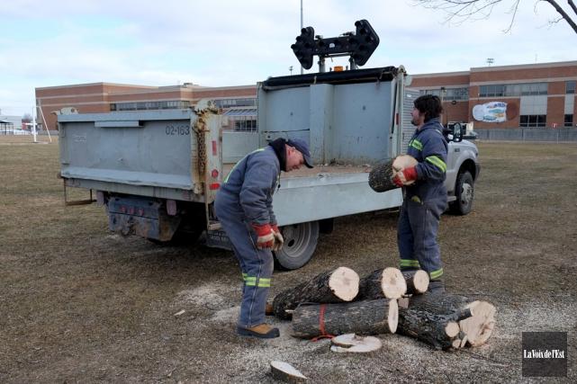 Les arbres doivent être coupés avant le 1eravril... (Alain Dion, La Voix de l'Est)