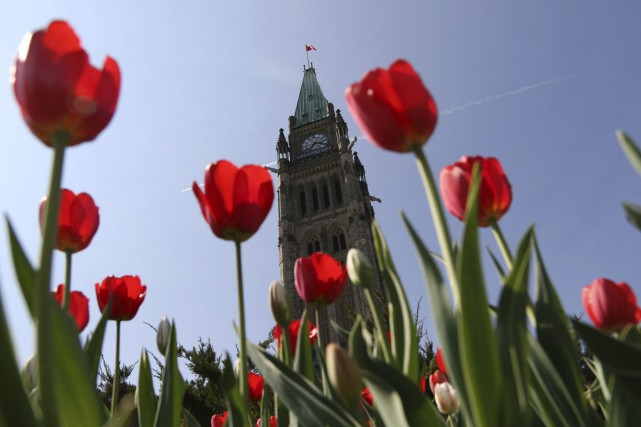 Le 65e Festival canadien des tulipes se tiendra... (Archives, Le Droit)