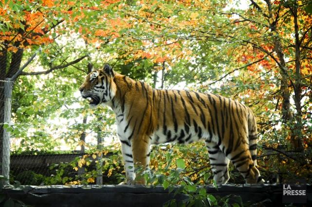 Une période transitoire permettra aux zoos et aux... (Archives La Presse, Bernard Brault)