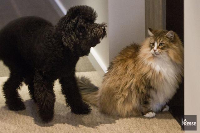 La possibilité que les vétérinaires ne chargent pas... (Archives La Presse)