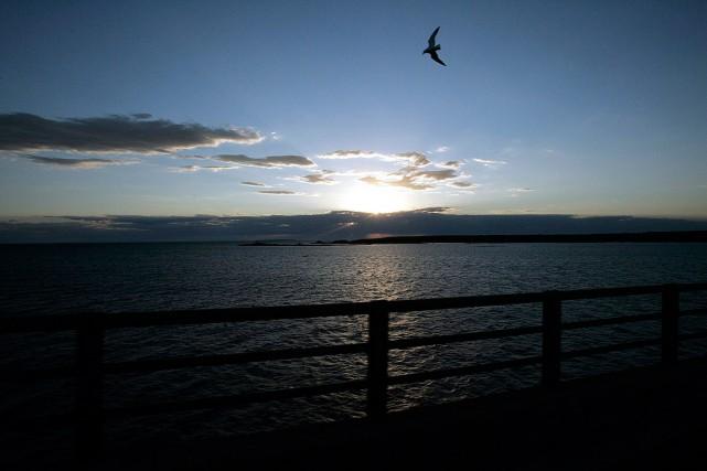 Sur la photo, un oiseau vole au-dessus du... (Carlos Osorio, archives AP)