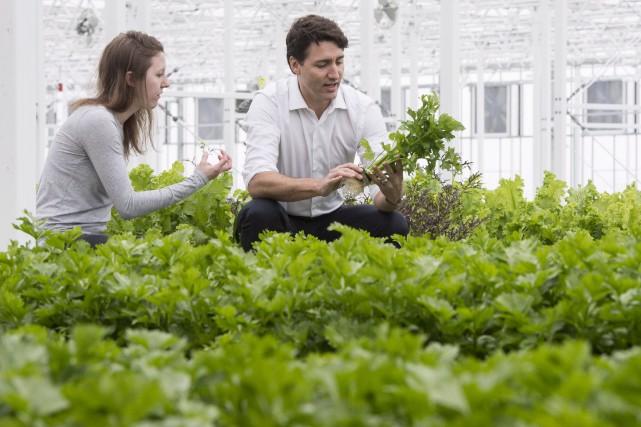 Justin Trudeau a visité vendredi l'entreprise Luca Farms,... (La Presse canadienne, Paul Chiasson)