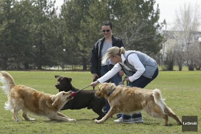 Promener son chien dans un parc municipal, même... (Archives, Le Droit)