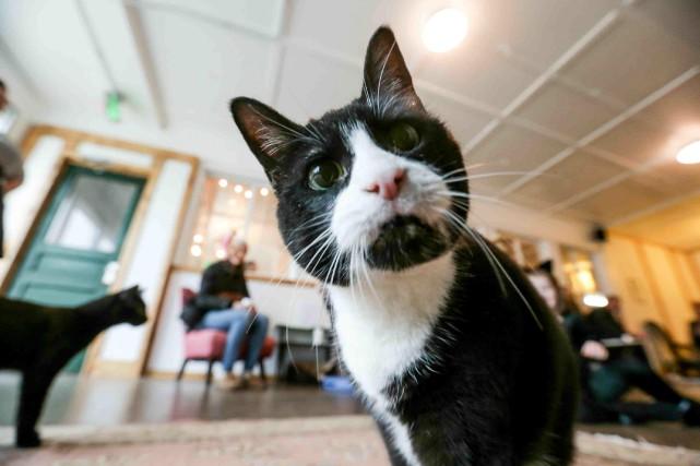 De nombreux propriétaires de chats ont recours au... (PHOTO ARCHIVES AP)