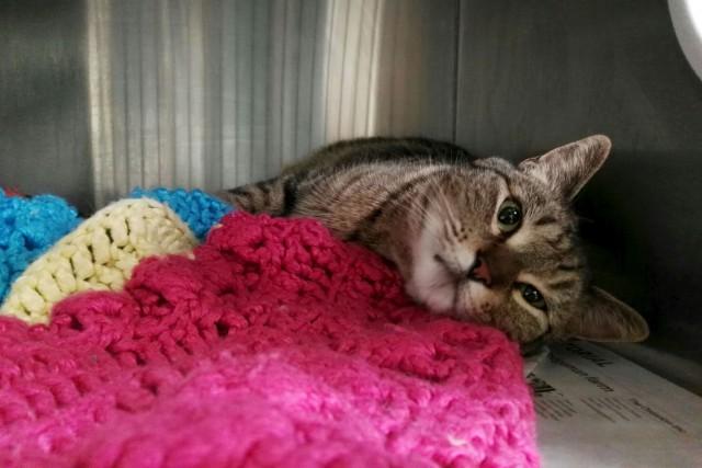Une chatte qui était portée disparue en Californie depuis quatre ans a été... (La Presse canadienne, fournie par Ashley Aleman)