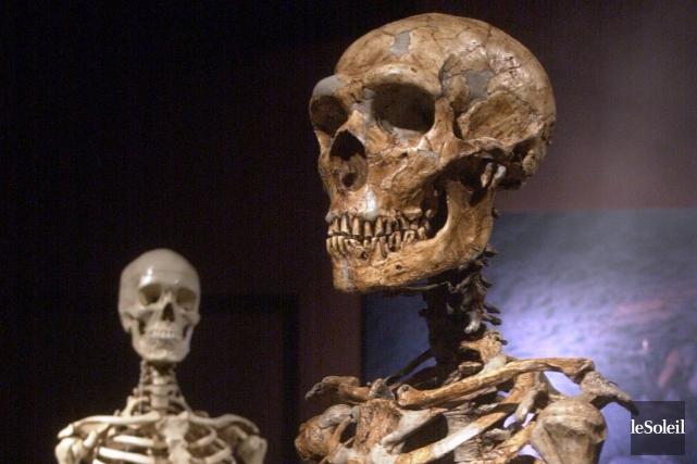 L'homme du Néandertal est disparu depuis 38 000... (Photothèque Le Soleil)