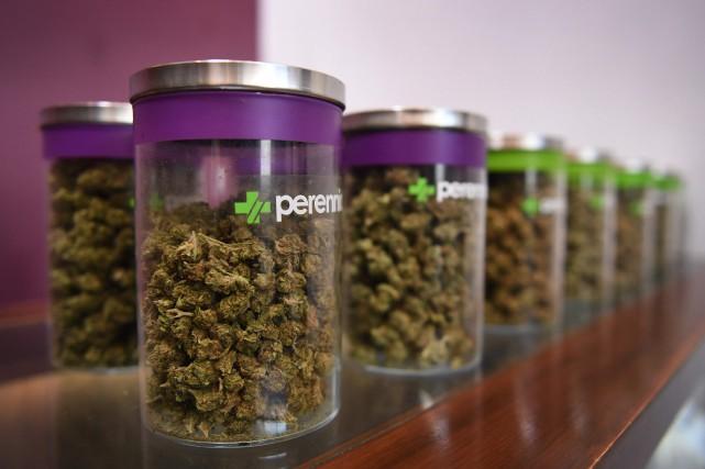 Le march du cannabis en pleine croissance malgr l for Croissance cannabis interieur