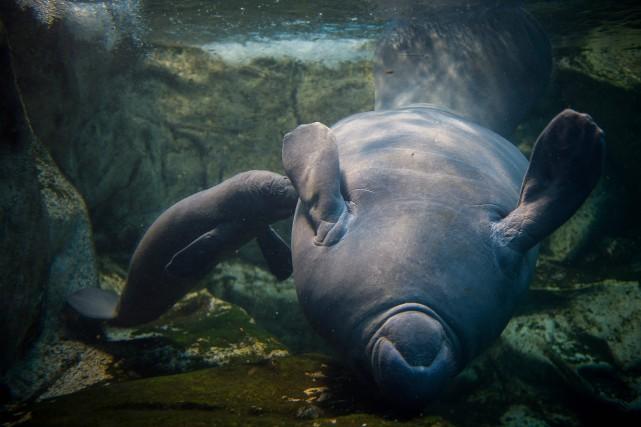 Ces animaux marins ont été parmi les tous... (ARCHIVES AFP)