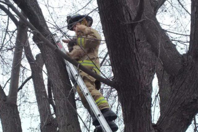 Tommy n'a pas apprécié être pourchassé par un... (Courtoisie, Service des incendies d'Ottawa)