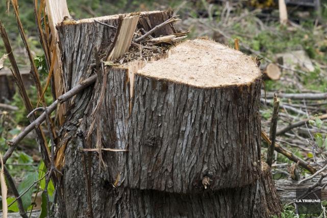 Environ 70 arbres et arbustes devront être coupés sur une distance de plusieurs... (Archives La Tribune, Julien Chamberland)