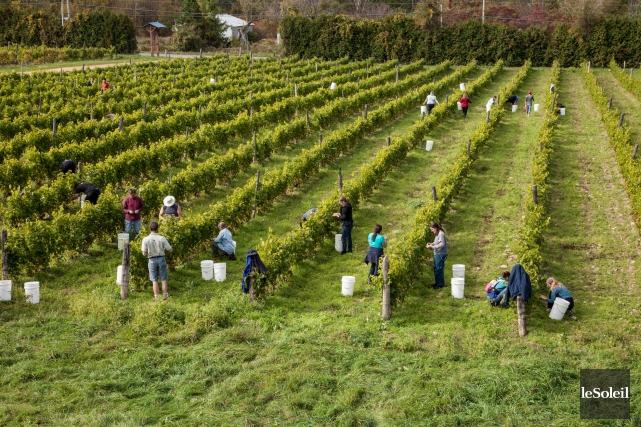 Les vins bio proviennent majoritairement de la France,... (Photothèque Le Soleil)