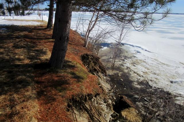 Ce sont maintenant les arbres qui menacent de... (Photo courtoisie)