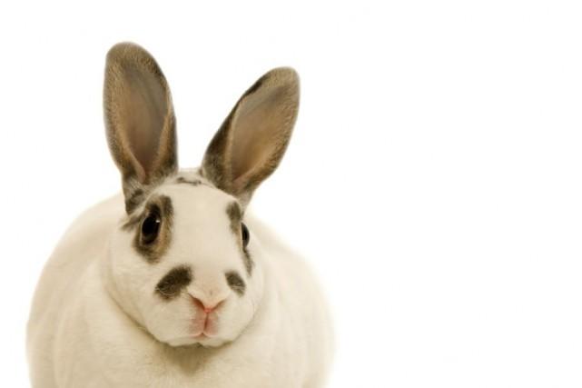 La fin de la semaine pascale sonne le début de la saison des lapins abandonnés. (Photos.com)
