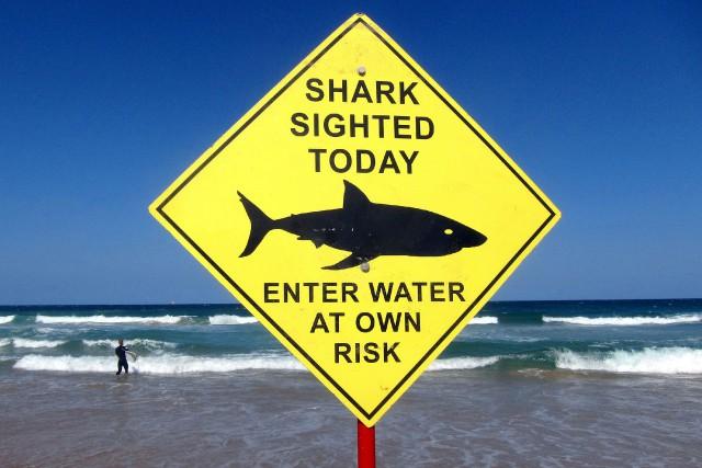 Les attaques de requins dans les eaux australiennes... (ARCHIVES REUTERS)