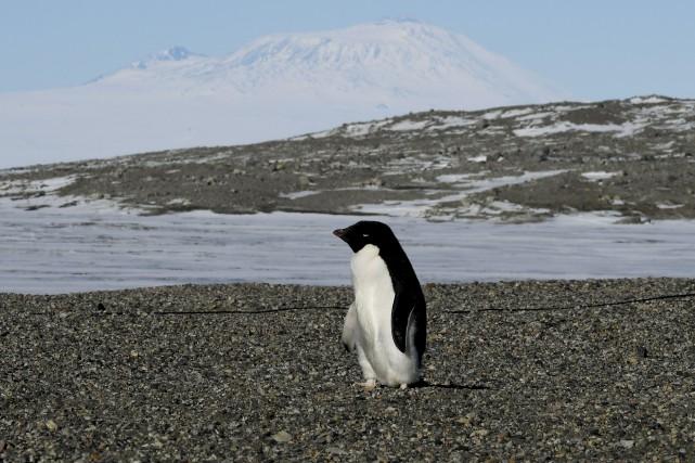 Marcher au milieu des manchots peut constituer une... (AFP, Mark Ralston)