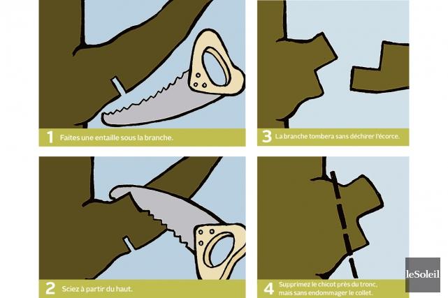 Les étapes à appliquer lors de la coupe... (Infographie Le Soleil)