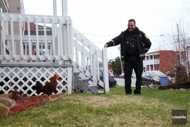 Les policiers croyaient avoir affaire avec une poule... (Julie Catudal, La Voix de l'Est)