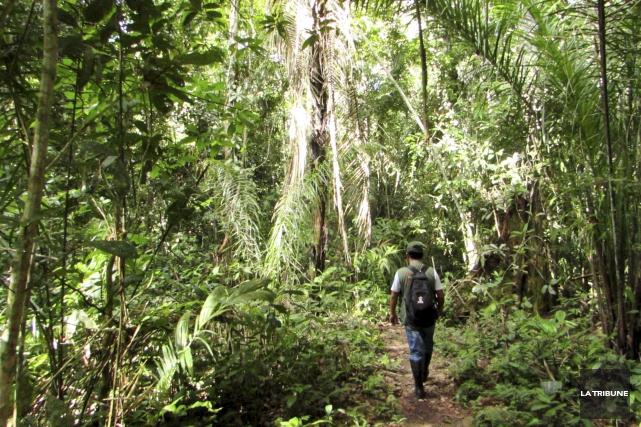 Dans le parc national de Madidi, en Bolivie,... (La Tribune, Jonathan Custeau)