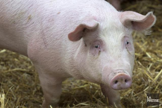 Le porc est le produit d'exportation agroalimentaire le... (archives La Presse)