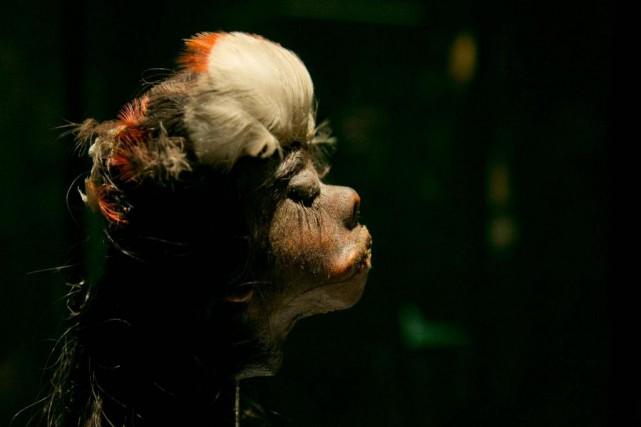 Authentique tête humaine réduite. Latechnique jivaro consistait à... (Photo David Boily, La Presse)