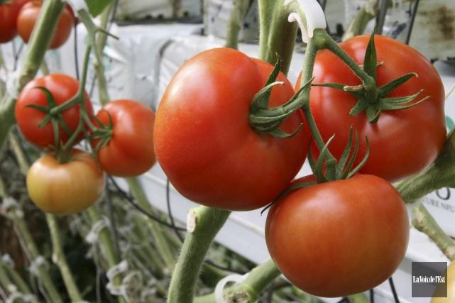 La construction de serres de tomates et de... (archives La Voix de l'Est)